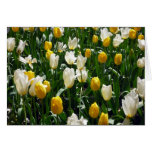 yellow white tulips greeting cards
