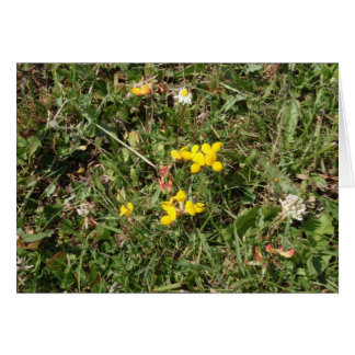 Yellow Wild Flower Card