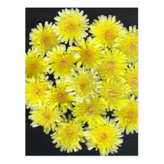 Yellow Wild Flowers Post Cards