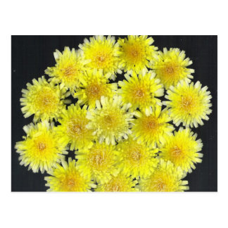 Yellow Wild Flowers Postcard