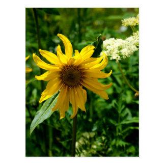 Yellow Wildflower Diva Postcard