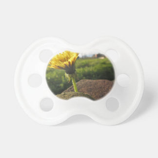 Yellow wildflower growing on stones at sunset pacifier
