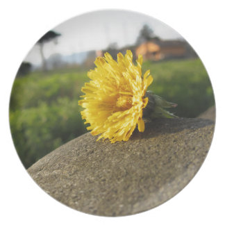 Yellow wildflower lying on a stone at sunset melamine plate