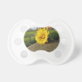 Yellow wildflower lying on a stone at sunset pacifier