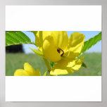 Yellow Wildflower Posters