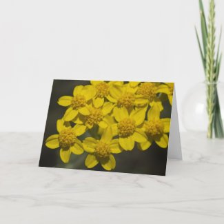 Yellow Wildflowers Cards