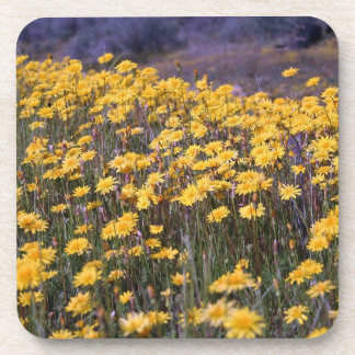 Yellow Wildflowers Beverage Coasters