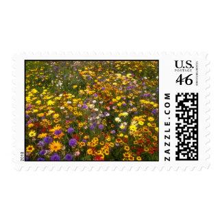 Yellow Wildflowers flowers Stamp