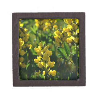 Yellow Wildflowers in the Mountains gift box Premium Gift Boxes