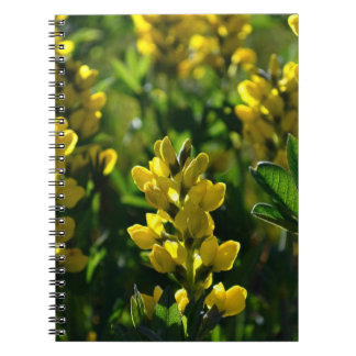 Yellow Wildflowers in the Mountains Notebooks