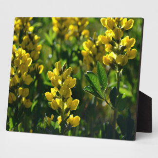 Yellow Wildflowers in the Mountains plaque