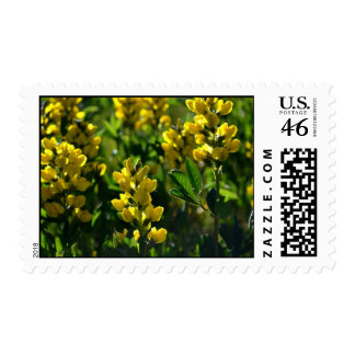 Yellow Wildflowers in the Mountains stamps