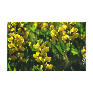 Yellow Wildflowers in the Sandia Mountains Gallery Wrap Canvas
