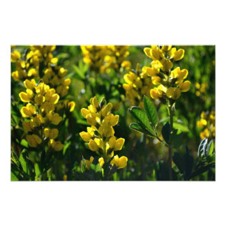Yellow Wildflowers in the Sandia Mountains Photo Print