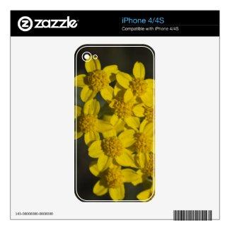 Yellow Wildflowers Iphone 4 Skin