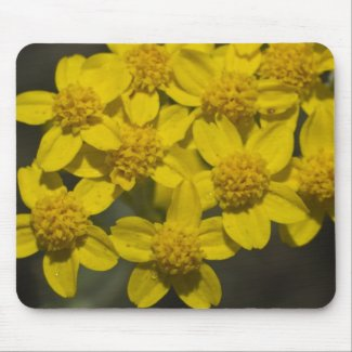 Yellow Wildflowers Mouse Pads