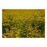 Yellow Wildflowers Nature Landscape Photo Poster