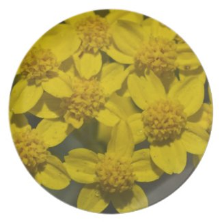 Yellow Wildflowers Party Plate