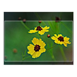 Yellow Wildflowers -   Plains coreopsis Postcard