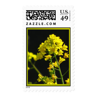 Yellow Wildflowers Postage
