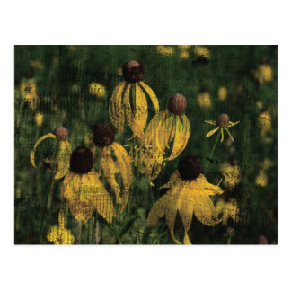 Yellow Wildflowers Postcard