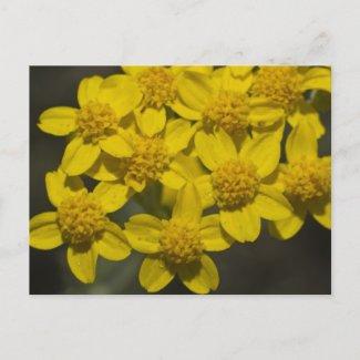 Yellow Wildflowers Postcards