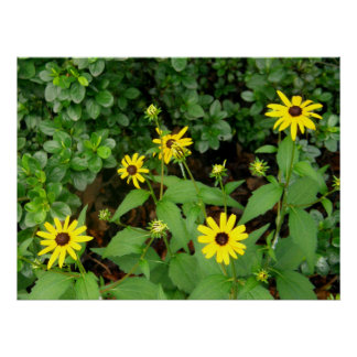Yellow Wildflowers Posters