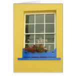 yellow window cards