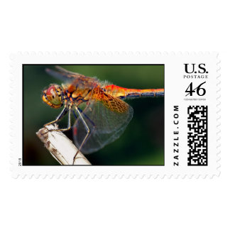 Yellow Winged Darter Dragonfly Postage Stamps