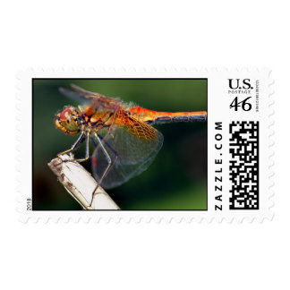 Yellow Winged Darter Dragonfly Postage