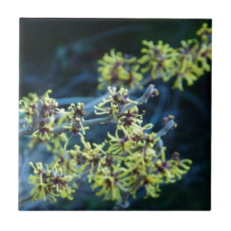 Yellow Witch Hazel Blossom Tile