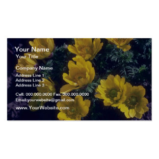yellow Yellow, (Adonis Walziana) flowers Business Card Templates