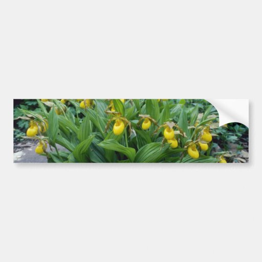 yellow Yellow Lady's Slipper (Cypripedium Calceolu Bumper Sticker