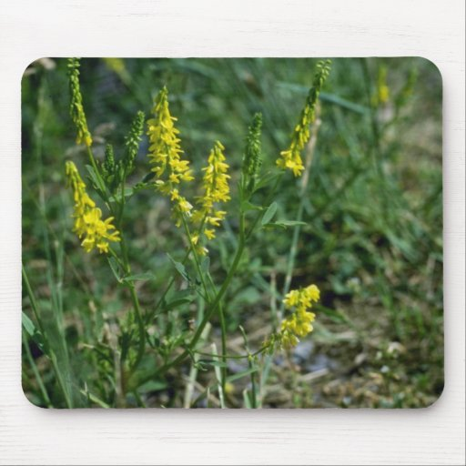 yellow Yellow Sweet-Clover (Melilotus Officinalis) Mouse Pad