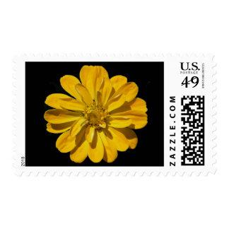 'Yellow Zinnea' Postage Stamps