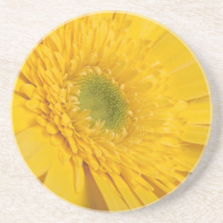 Yellow zinnia blooms on a coaster