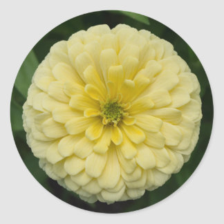 Yellow Zinnia Flower Round Stickers