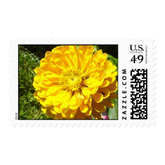 Yellow zinnia postage