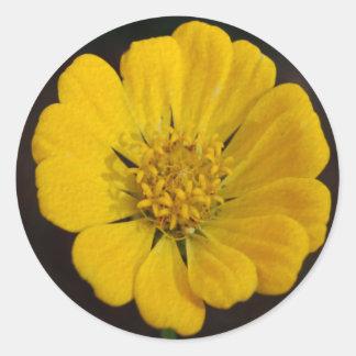 Yellow Zinnia Sticker