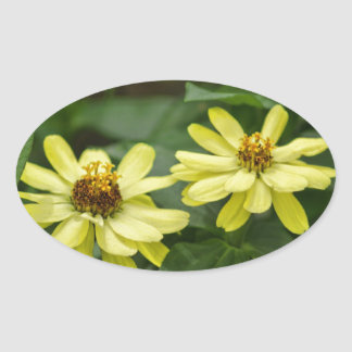 Yellow Zinnias Oval Sticker