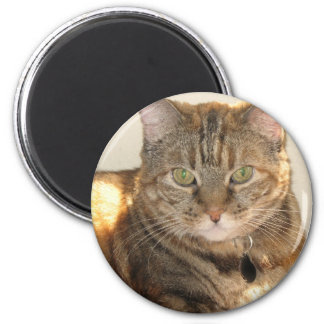 yellowed eyed cat 2 inch round magnet