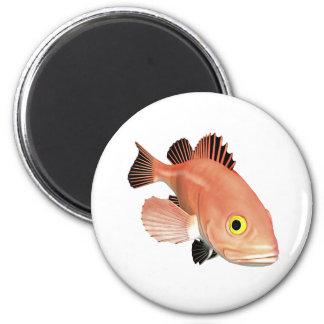 Yelloweye Pacific Rockfish Magnet