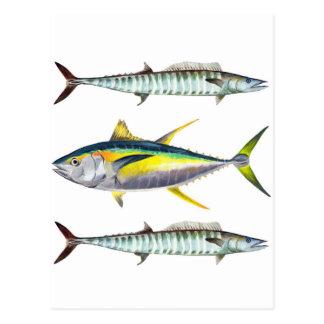 yellowfin and wahoo fish pattern postcard