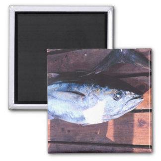 Yellowfin Tuna caught 2 Inch Square Magnet