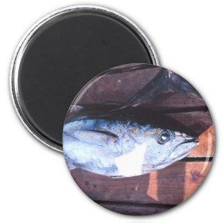 Yellowfin Tuna caught Magnet