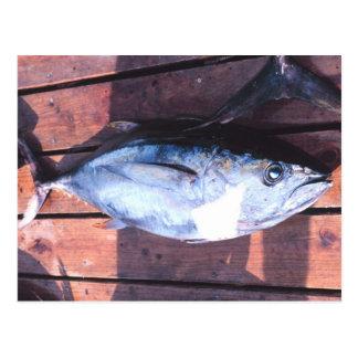 Yellowfin Tuna caught Postcard