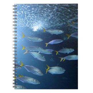 Yellowfin Tuna Notebook