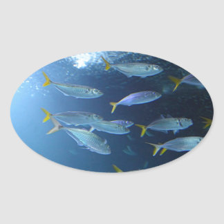 Yellowfin Tuna Oval Sticker