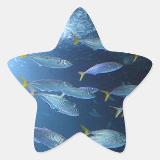 Yellowfin Tuna Star Sticker
