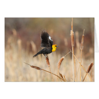 Yellowheaded Blackbird Greeting Card